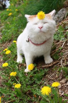 """sologatos:  27243  ""Ah, le Spring!…"" Photo via cybergata    """