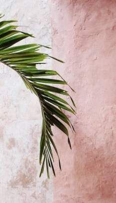 Пальма pink and green, pastel pink wallpaper, summer aesthetic, pink aesthetic, plant Plant Aesthetic, Summer Aesthetic, Simple Aesthetic, Aesthetic Pastel, Whatsapp Wallpaper, Wallpaper Backgrounds, Pastel Pink Wallpaper, Orange Wallpaper, Plant Wallpaper