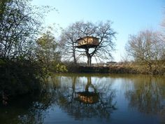 House in a tree? Perfect flood evasion!