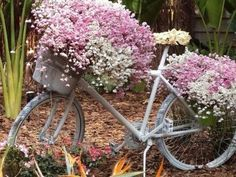 bike e flores! Old Bicycle, Old Bikes, Beautiful Gardens, Beautiful Flowers, White Flowers, Fresh Flowers, Purple Flowers, Bike Planter, Dream Garden