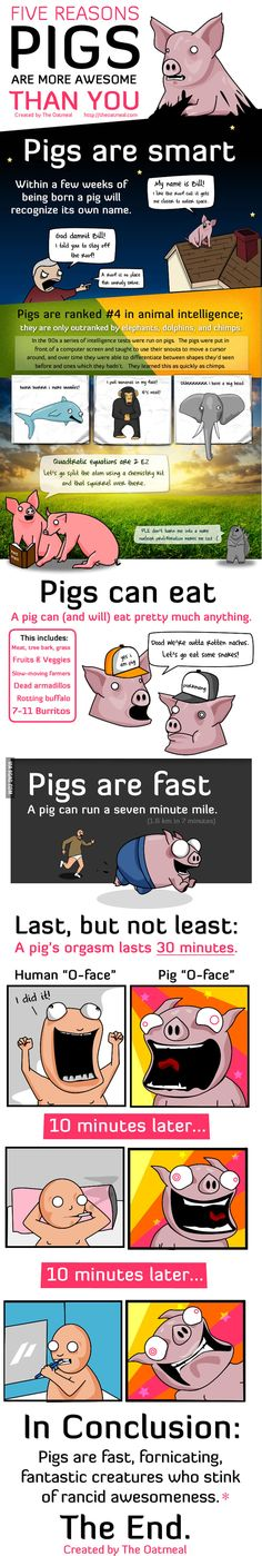 5 Reasons Pigs Are More Awesome Than You
