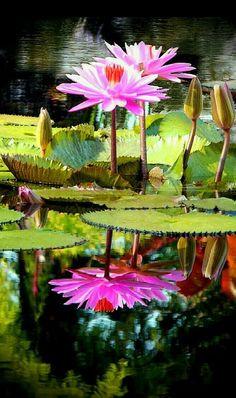 Lotus Painting, Oil Painting Abstract, Abstract Canvas, Painting Art, Canvas Art, Lotus Art, Lily Pond, Water Flowers, Belle Photo