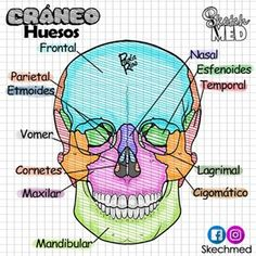 Anatomia Y Fisiologia Humana Anatomia y fisiologia humana storage organization for relations - Storage And Organization Medicine Notes, Medicine Book, Med Student, Nursing School Notes, Science Notes, Medical Anatomy, Human Anatomy And Physiology, School Study Tips, Medical Illustration