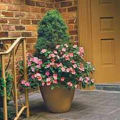 Impatiens & Dwarf Spruce | Use impatiens to accent porches and entryways. Here, a skirt of coral impatiens surrounds a dwarf Alberta spruce.