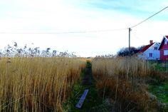 Feld mit Trampelpfad