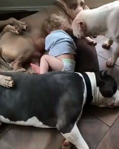 Dogs and Puppies Funny Animal Videos, Cute Funny Animals, Cute Baby Animals, Animals And Pets, Beautiful Dogs, Animals Beautiful, Cute Puppies, Cute Dogs, Nanny Dog
