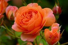 rose louise clements - Tìm với Google