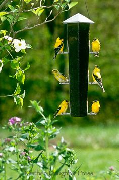 watching the goldfinches  #PrincessCruises and #travel