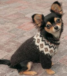A easy written pattern to make your own dog sweater with fair isle look. The sweater is meant for little dogs, so for example a chihuahua or a dog thats a little bigger. Love Knitting, Knitting Kits, Knitting Patterns, Pet Sweaters, Knit Dog Sweater, Knitted Dog Sweater Pattern, Little Dogs, Dog Jumpers, Icelandic Sweaters