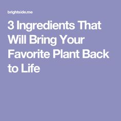 3 Ingredients That Will Bring Your Favorite Plant Back to Life