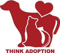 dogs, Advocate for Saving Dogs Facebook transport GROUPS for ALL states in the USA