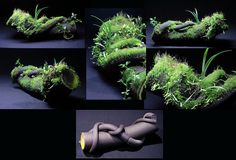 Hygrolon fake log By Mikaels orchids [The ever popular promotional photo from it's original source! Elsewhere in his feed he shows how he made it, and here is a clearer view of how it grew in] aquaponics Frog Terrarium, Aquarium Terrarium, Reptile Terrarium, Small Terrarium, Indoor Garden, Indoor Plants, Reptiles, Amphibians, Bonsai