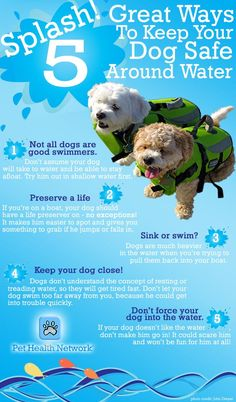 Water safety tips for dogs in the summertime.  #summertipsforpets #purelove4pets
