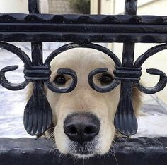Cute Funny Animals, Funny Animal Pictures, Cute Baby Animals, Funny Dogs, Animals And Pets, Smart Animals, Funniest Pictures, Hilarious Photos, Cute Pictures
