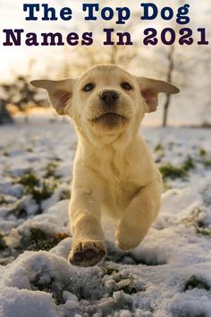 Dog Names – The Top Dog Names In 2021 – Hundreds of Awesome Ideas Awesome Dog Names, Funny Dog Names, Cute Puppy Names, Cute Names For Dogs, Best Dog Names, Funny Dogs, Cute Puppies, Cute Dogs, Top Male Dog Names