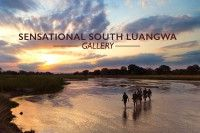 South Luangwa Gallery.
