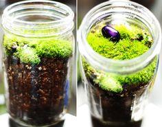 Moss Garden #1