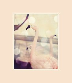 pink flamingo photography shabby chic cottage flamingo decor pale pink bird animal cream buttercream black beaks flamingo wall art. $19.00, via Etsy.