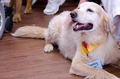 Stanley is an adoptable Golden Retriever Dog in Birmingham, AL. Hi everyone, my name is Stanley - I am a 12 years young Golden male.  My family is moving into a smaller home and felt it wasn't suited for me.  They asked AGB to help them and to find me the best home possible.  I am really, really sad and I don't understand, as I have been with my family ever since they found me as a stray when I was about two years old...