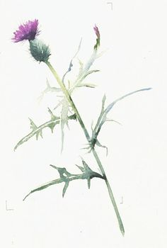 """Lincoln~ Thistle-Plucker :""""Let it be said of me by those who know me best, that I always plucked a thistle and planted a flower when I thought a flower would grow. Watercolor And Ink, Watercolor Flowers, Watercolor Paintings, Pastel Decor, Botanical Drawings, Botanical Prints, Scottish Thistle Tattoo, Scotland National Flower, Academic Drawing"""