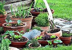 A productive growing guide for container vegetable gardening with all you need for growing an indoor or patio potted garden.