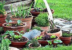 Container Vegetable Gardening – Growing an Indoor or Balcony Potted Garden