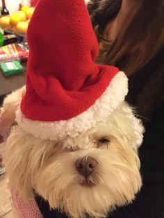 Santa pup;)