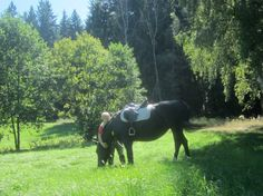 """I am so grateful and happy for this beautiful day today. Ride in Gettengrün / Vogtland  Kerstin from Germany August 19.2012 """"Gratitude through photography"""" ~"""