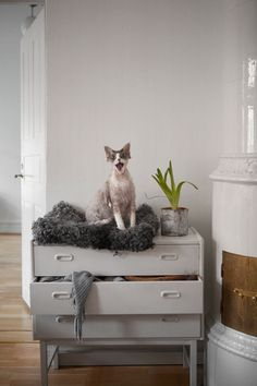 Hiro is my Swedish cat friend. He is a Cornish Rex. I'm crazy about him and the blog where you can find him and his mom's great designs: Fine Little Day