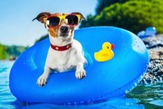 5 Water Safety Tips for your Dog - Great Pet Health Dog Collar With Name, Dog Collar Tags, Custom Dog Collars, Dog Collars & Leashes, Dog With Glasses, Road Trip, Dog Training Classes, Summer Dog, Summer Time