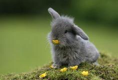little grey rabbit! cuuute