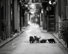 """""""Alley-cats"""""""