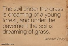The soil under the grass is dreaming of a young forest, and under the pavement the soil is dreaming of grass. Wendell Berry