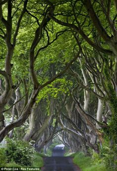 Derbyshire, & the eerie trees at The Dark Hedges, Co. Antrim (UK) Photo by Peter Cox