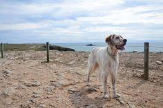 Irish, La côte sauvage de Quiberon