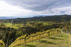Tasting Menu, Tasting Room, Visit Austria, Types Of Wine, Wine List, Pinot Noir, Wine Making, Hotel Spa, Small Towns