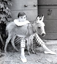 Reason 546 why I need a baby donkey