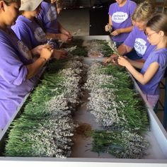It's that glorious scent times 1,000! Get your organic lavender from www.explorelocaluniverse.com!  Our Abundant Harvest