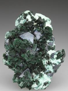 CUPRITE and MALACHITE on CHRYSOCOLLA Minerals from Mashamba West Mine, Kolwezi, Katanga. Africa .