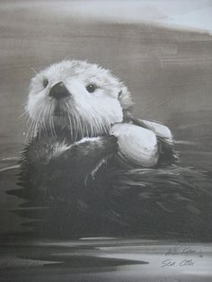 William E. Ryan SEA OTTER