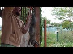 How to Slaughter, Skin, Gut, and Butcher a Meat Rabbit.  Clean and process a rabbit.