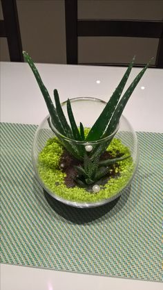 Spring decoration with fresh green coloured stones aloevera plant and pearls