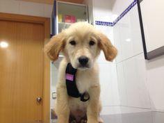 El perro Terry el día de su primera vacunación
