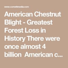 American Chestnut Blight - Greatest Forest Loss in History There were once almost 4 billion American chestnuts and they were among the largest, tallest, and fastest-growing trees in the eastern forest. The wood was long-lasting, straight-grained, and suitable for furniture, fencing, and building. The nuts fed billions of birds and animals. It was almost a perfect tree - that is, until it was killed by a blight a century ago. That blight has been called the greatest ecological disaster…