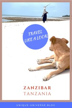 Zanzibar's beaches were the perfect end to our trip through Tanzania. Check out our responsible travel guide! Zanzibar Beaches, Responsible Travel, Cultural Experience, African Countries, Like A Local, Travel Memories, Culture Travel, Tanzania, Travel Guides