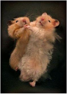 Bailando un Vals! :P
