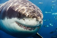 22 Insane Photographs of Sharks | Airows
