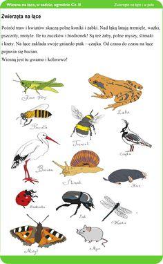 Znalezione obrazy dla zapytania zwierzęta na łace