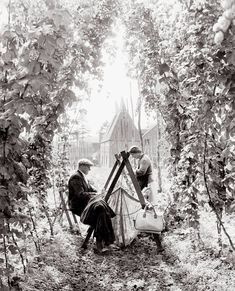 Hahnemuhle PHOTO RAG Fine Art Paper (other products available) - Hop picking in Paddock Wood Kent<br> September 1962 - Image supplied by Topfoto - Fine Art Print on Paper made in the UK Fine Art Prints, Framed Prints, Canvas Prints, Old Pictures, Old Photos, Vintage Photos, September, East Sussex, Photo Mugs