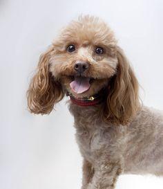 Simpatía natural.  #perro #dog #pet #petcollar #love #tachas #scottish #dogcollar #trend #top